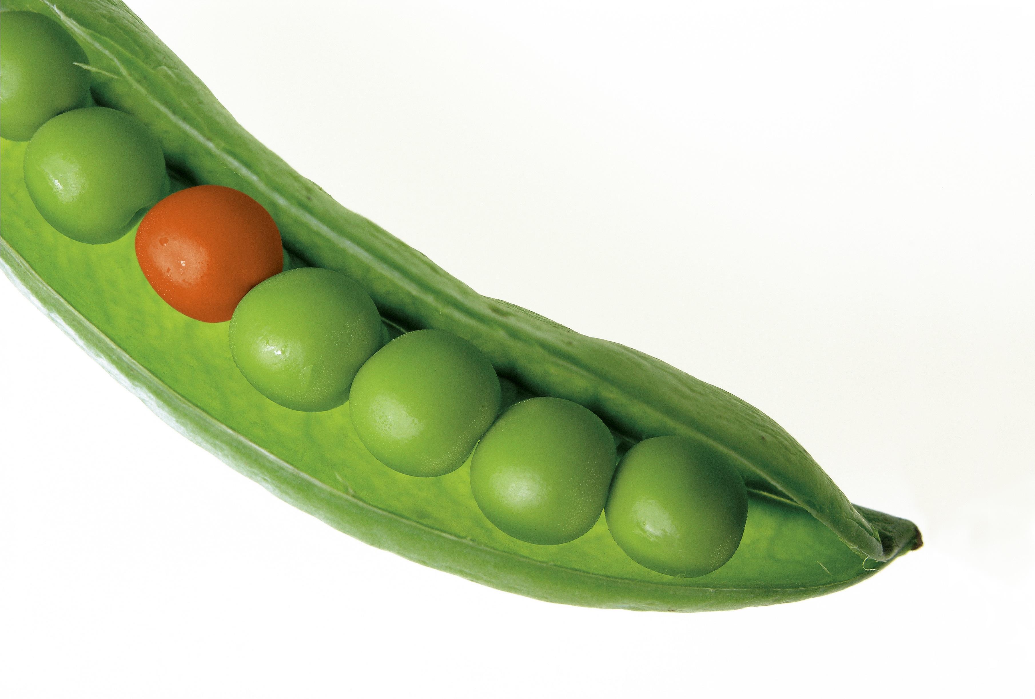 Genetyka mendlowska – II prawo Mendla
